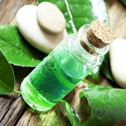 26046273 – essential oil bottle.tea tree essence for aromatherapy